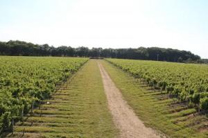 Visite Sentier Viticole du Domaine de l'Aulée